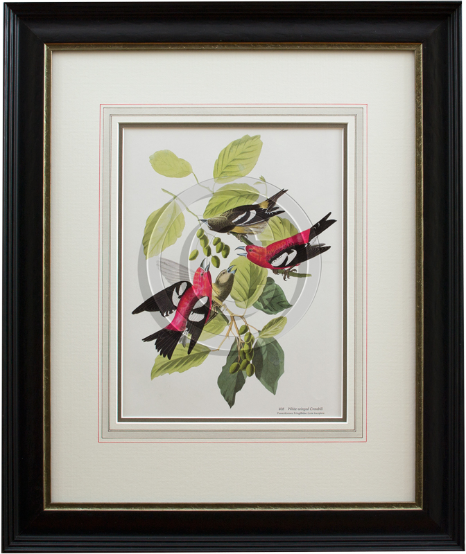 image of botanical bird print