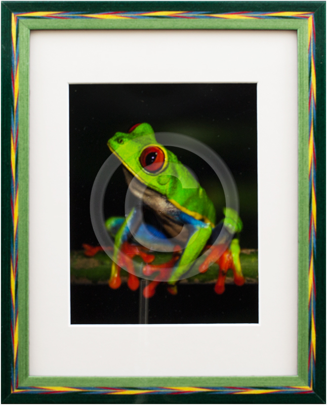 Image of Frog Photograph in Picture Frame