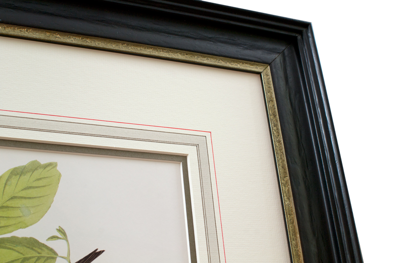 Framed Botanical With French Mat Example Phoenix Art
